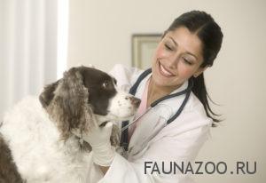Скорая удаленная помощь для домашних животных