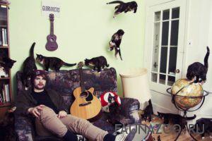 Четыре кота и чистота в доме