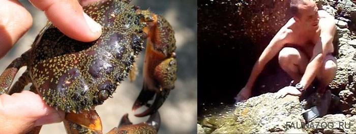 как правильно ловить толстолобика на технопланктон