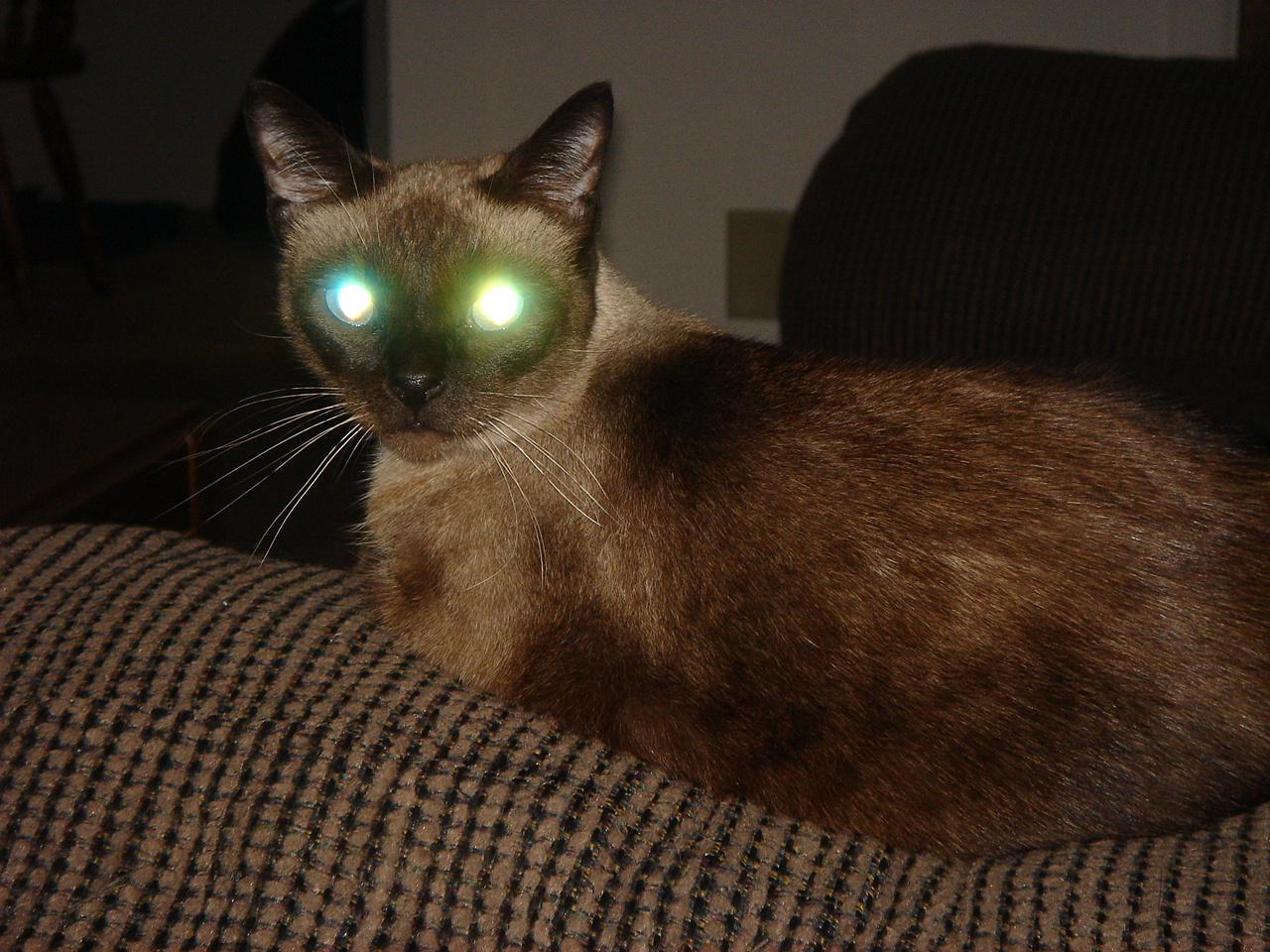 """Результат пошуку зображень за запитом """"глаза  кошек"""""""