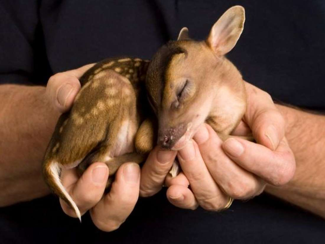 Tumblr cute baby animals