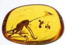 Инклюзы: янтарь, внутри которого застыли насекомые