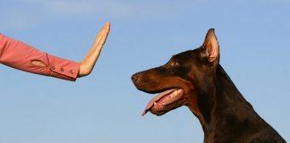 "Как обучить собаку команде ""Фу!"""