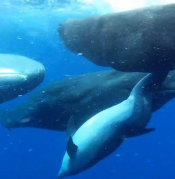 Возможна ли дружба между дельфинами и кашалотами