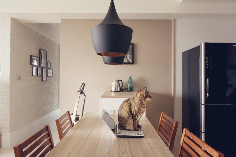 Как содержать кошку в городской квартире