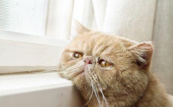 5 признаков того, что вашей кошке скучно