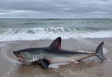Акулий плавник - общая картина большой проблемы