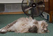 Как помочь вашей кошке перенести жару в квартире? 5 советов