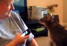 Очередные звезды Ютьюба – сердитый кот и умный пес