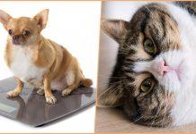 Как диагностировать и предотвратить ожирение у домашних животных