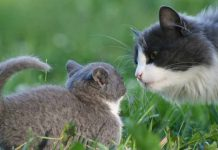 Как считается возраст кошки? Проверьте сколько лет вашей кошке