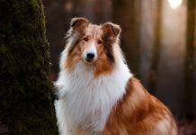 Порода собак без гена злости