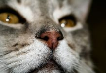 Причины возникновения насморка у кошки