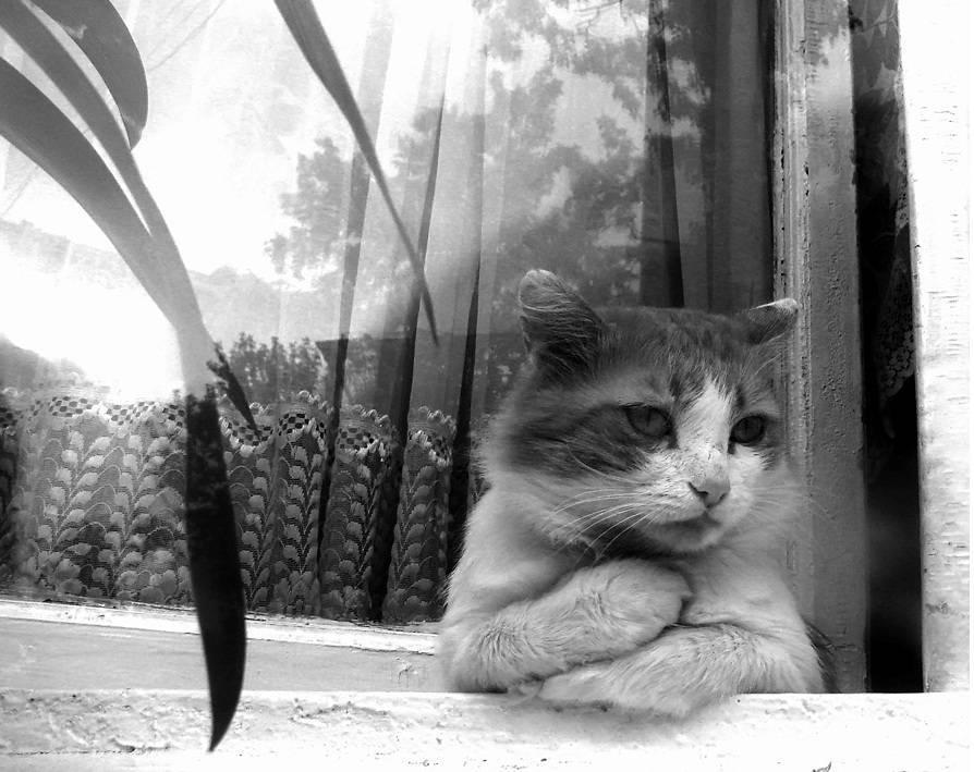 5 вещей, которые не нравятся вашему коту