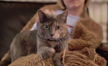 Зачем кошки перебирают лапами: топчут плед или хозяина?