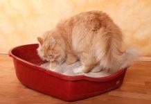 Идеальный кошачий туалет - сколько, как и где?