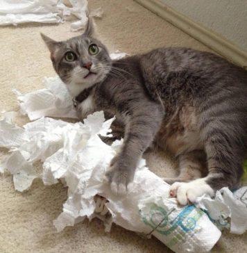 Как усмирить шаловливого кота