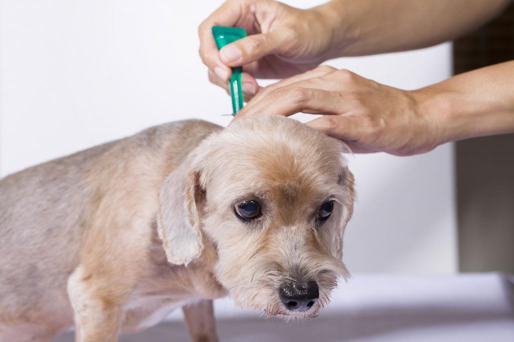 Что стоит знать о профилактике домашних животных от паразитов?