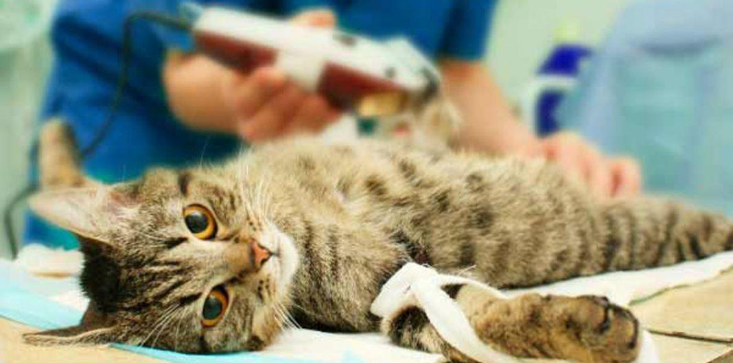 Что такое стерилизация / кастрация животных?