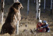 Встречи с медведем