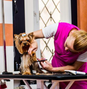 Как подготовить собаку к посещению салона красоты